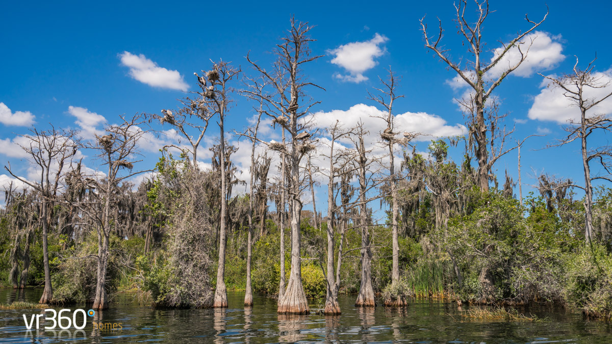 Butler Chain of Lakes - Spanish Moss